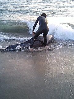 クジラを助けるオヤジ!